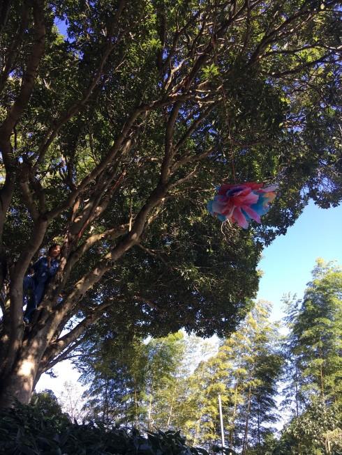 クリエイティブな木登り