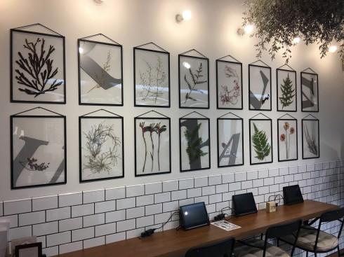 ここでも植物アート